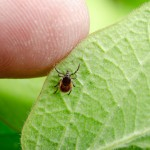 MS And Insect Borne Disease Danger: What Works And What Doesn't Profiled