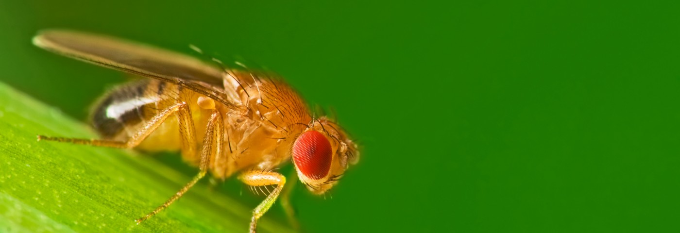 Therapeutic Target for Stabilizing Histamine, an Inflammatory Agent in MS, Identified in Fruit Fly Study