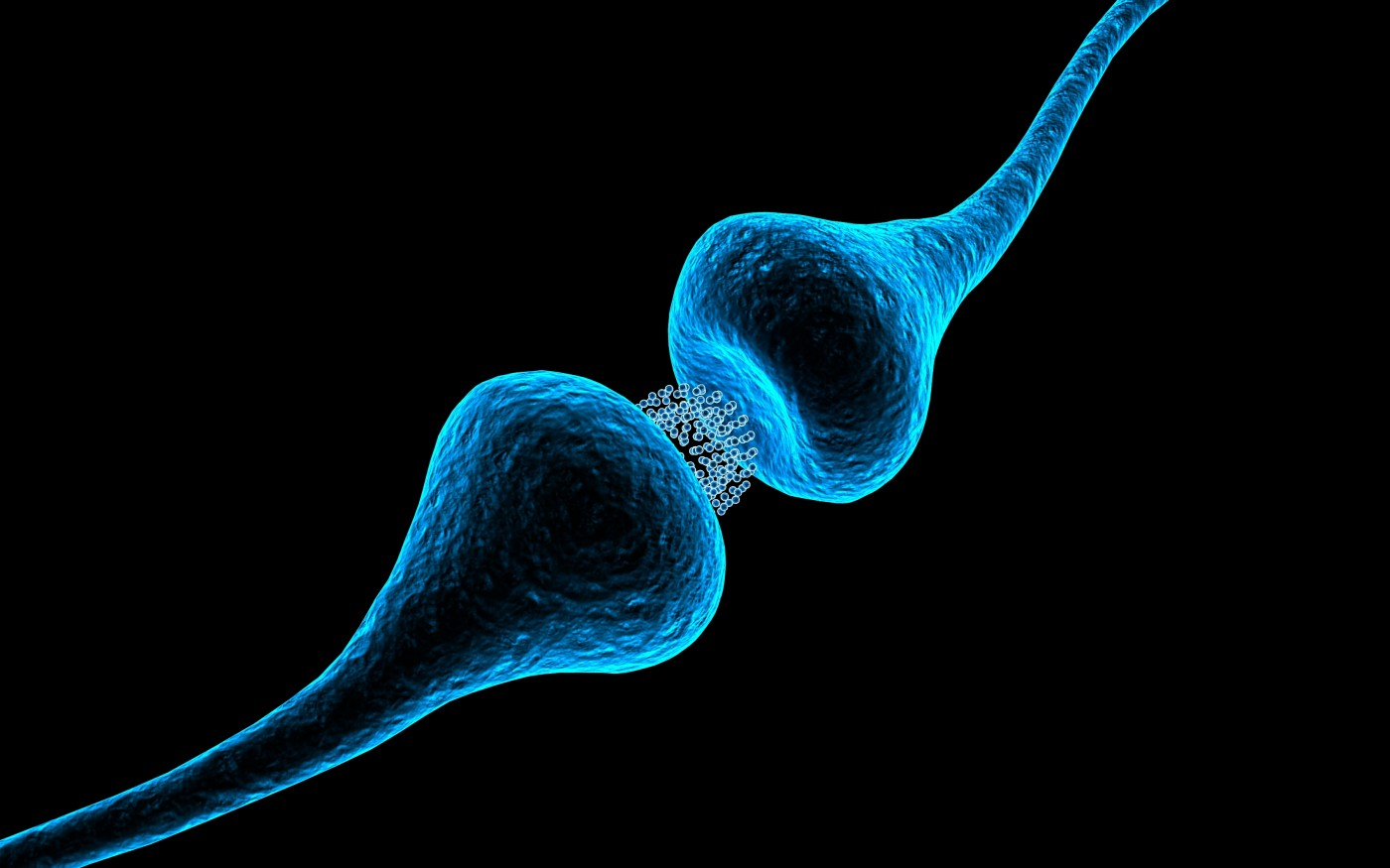 Synapses in a mouse model of MS are damaged in a process unrelated to myelin damage.