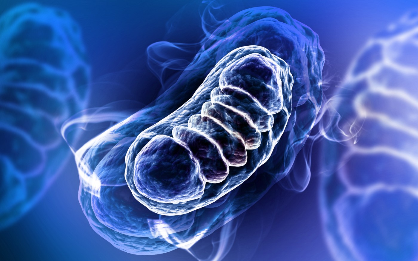 mitochondria and MS
