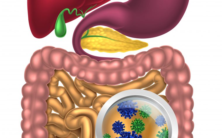 gut micro biome and MS