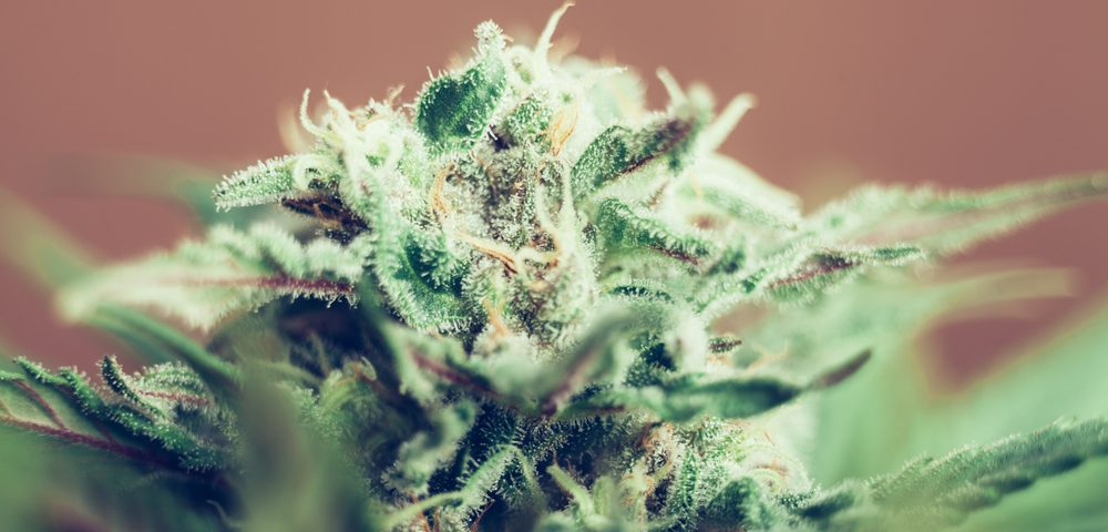 Celgene Partners with Abide to Bring Cannabis-like Treatment for MS into Further Clinical Tests