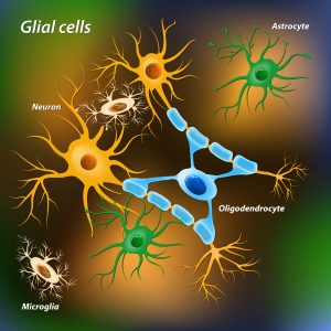 myelin-producing cells