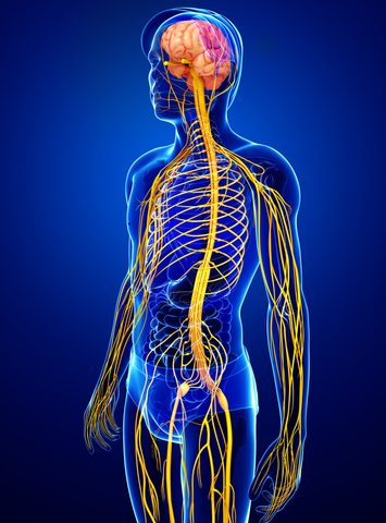 Degree of Posture Difficulties in MS Linked to Areas of Nervous System Most Damaged by Disease