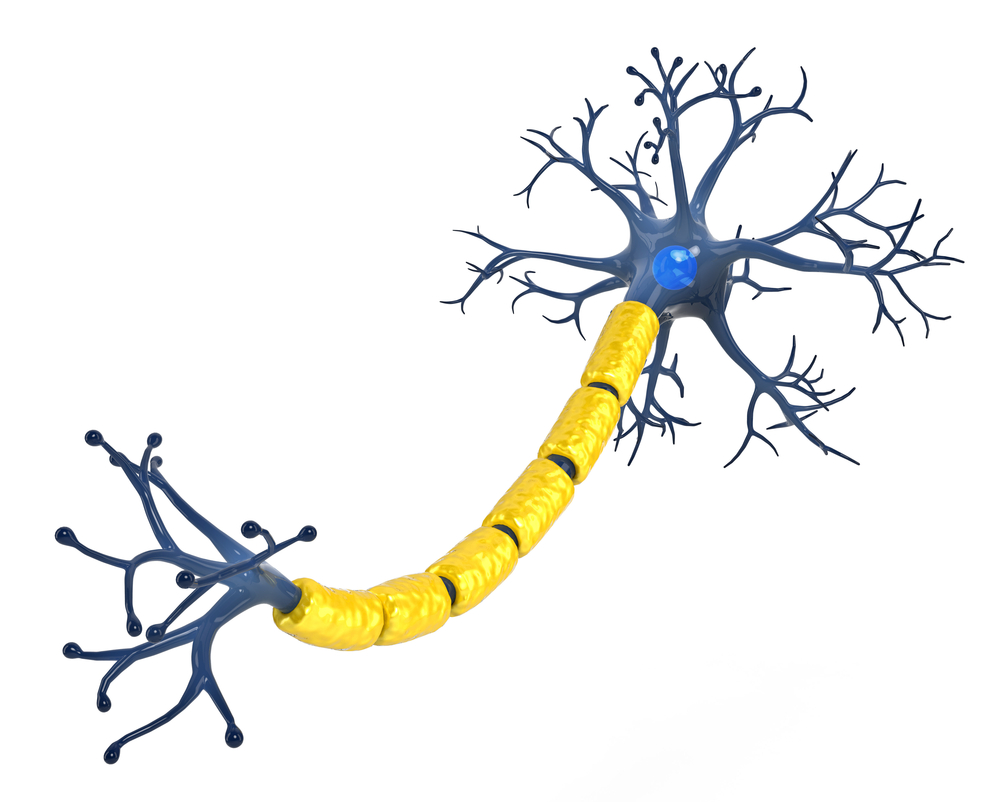 myelin and MS