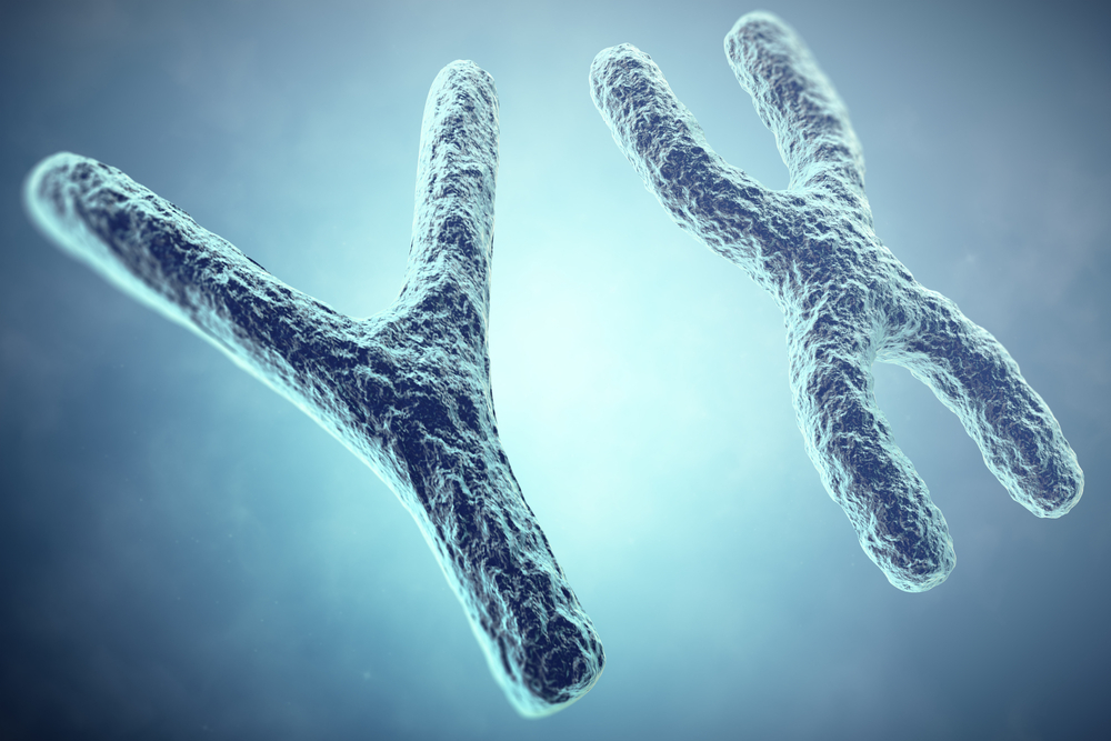 Sex chromosomes and MS