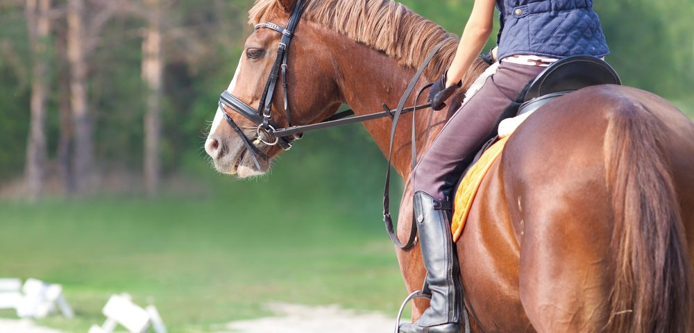 Horseback Riding Helps People with Movement Disabilities, Review of 16 Studies Concludes