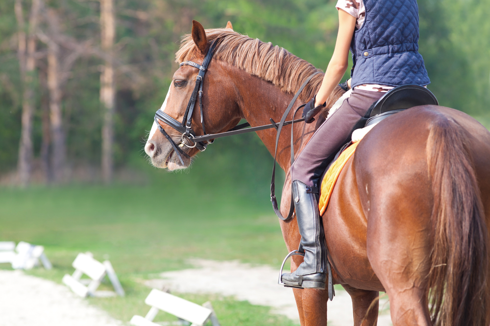 Horseback therapy for MS