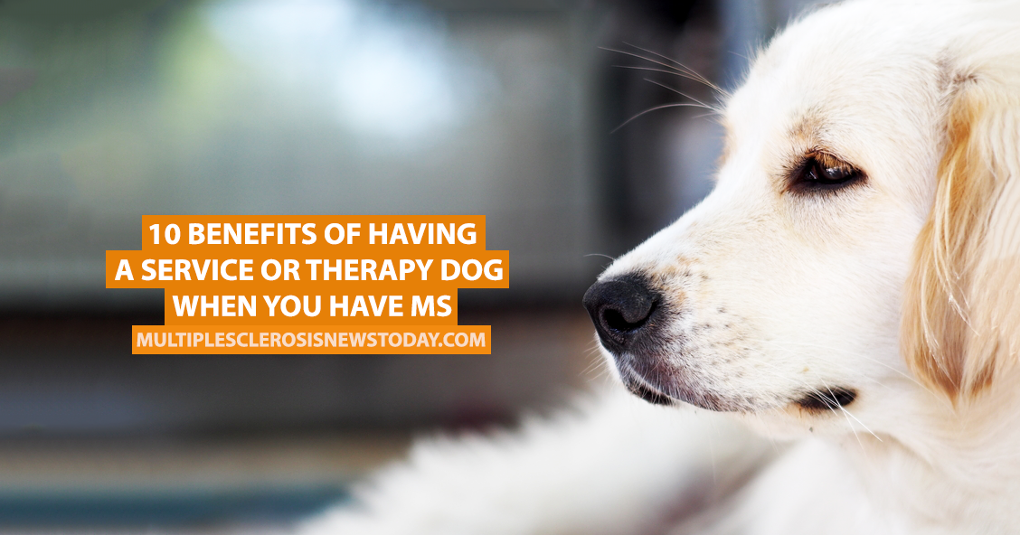 the benefits of having dogs as companions Does having a goldfish confer the same health benefits as having a golden retriever most pet studies were of people who had a dog or a cat, making it difficult to draw conclusions about health benefits of birds, lizards, fish, or other pets.