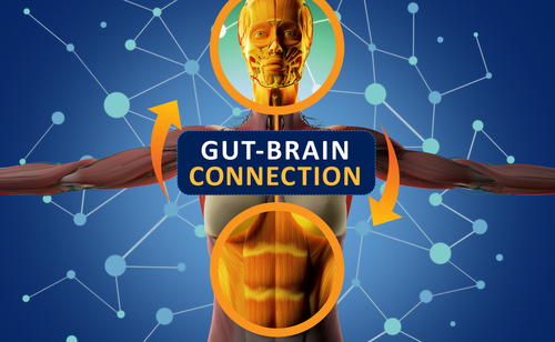 Researchers Identify Nerve Pathway Linking Brain Inflammation, Gut Dysfunction in MS