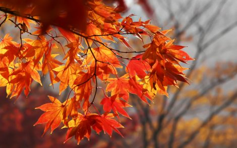 The Awe of Autumn: Welcoming Change