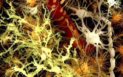 Taurine Seen to Boost Effectiveness of MS Therapies in Remyelination Process, Study Shows