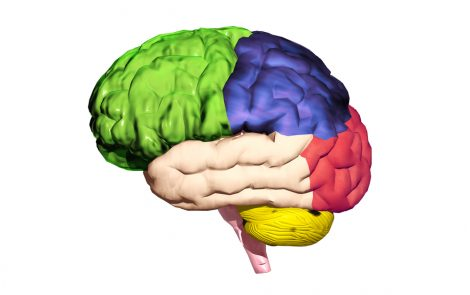 Loss of Deep Grey Matter in Brain Linked to Greater Disability, MS Progression in Study