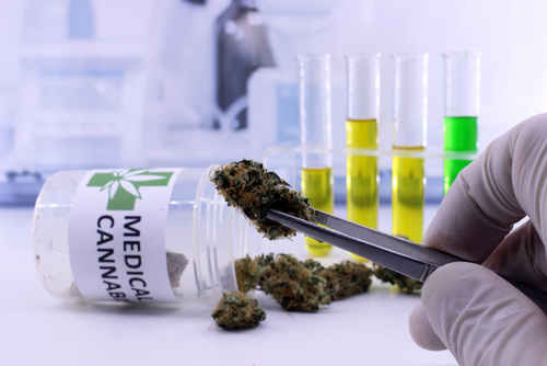 Using Medical Marijuana for MS Symptoms May Affect Your Employment