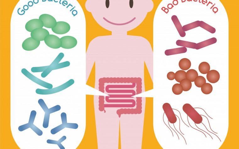 gut bacteria and T cells
