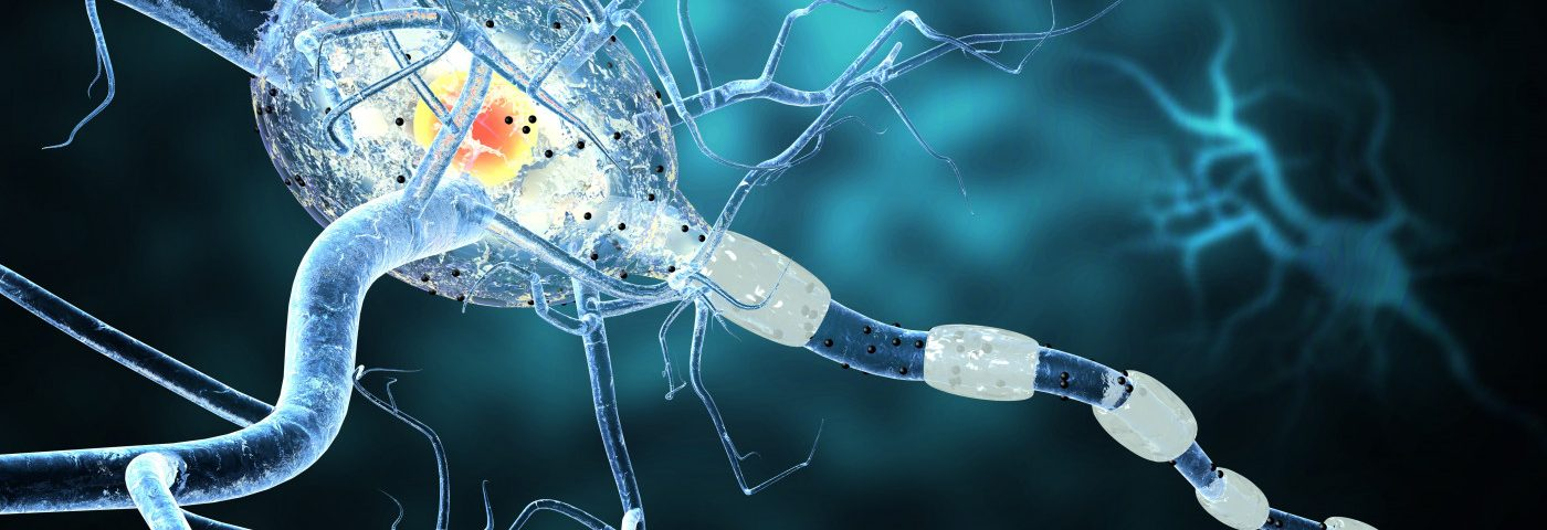 Adult Oligodendrocytes May Replenish Myelin Production in MS, Study Suggests