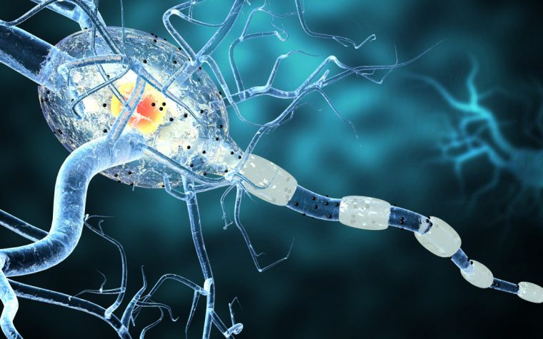 myelin repair possibilities