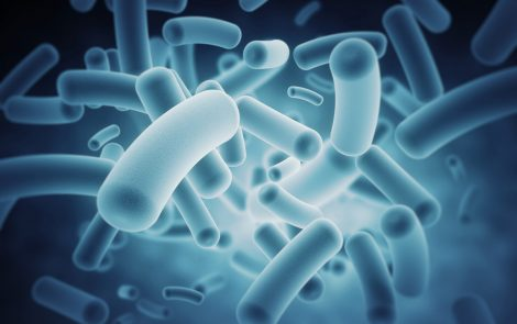 Microbes in Gut Protect Nervous System After Viral Infections, Study Suggests