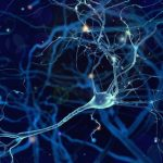 nerve impulses and gene therapy