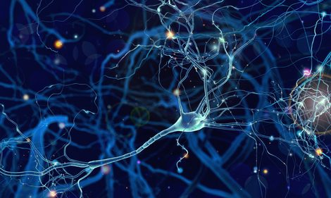 2 Potassium Channels Key to Fast Transmission of Impulses Along Myelin-rich Nerve Fibers, Study Shows