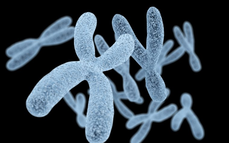 X chromosome and disease