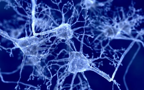 Myelin Health Depends on Steady Supply of Lipids, Study Suggests
