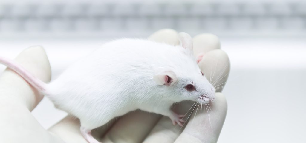 Blocking LRP1 May Halt Inflammation, Promote Remyelination, Mouse Study Suggests