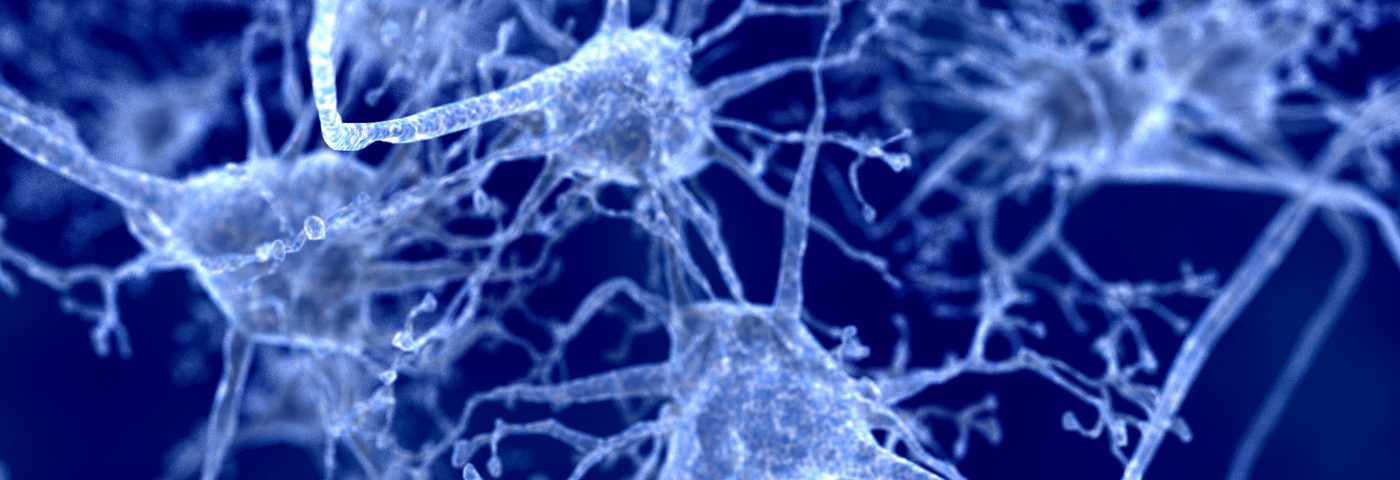 Newly ID'd Group of Astrocytes Seen to Help Prevent Brain Inflammation