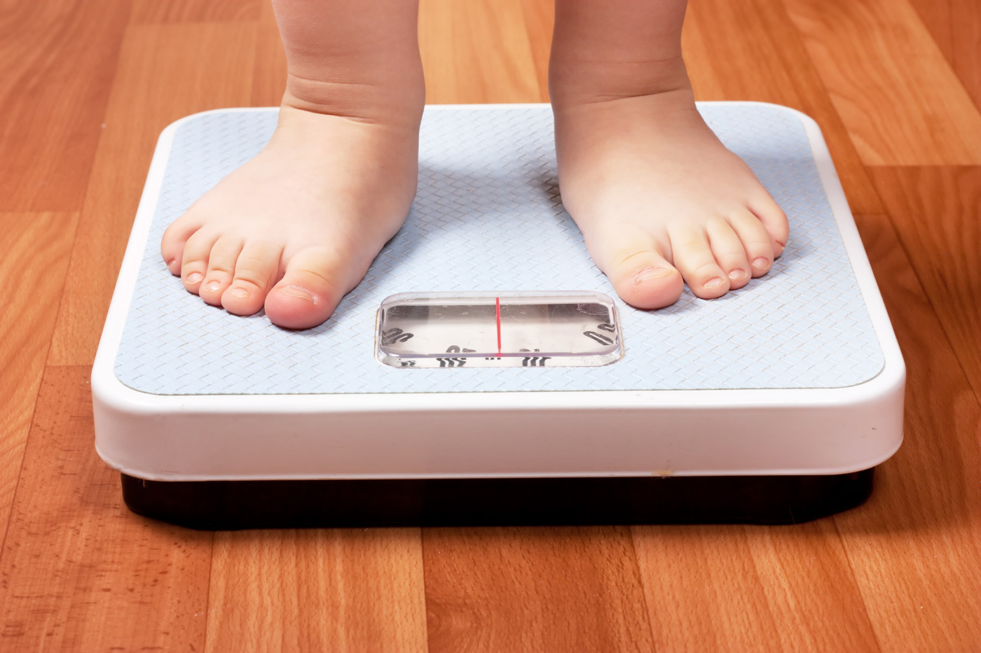 obesity and MS risk