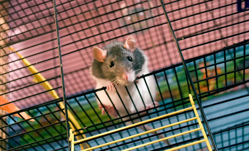 New Immune Cells Therapy Found to Suppress MS Symptoms in EAE Mice