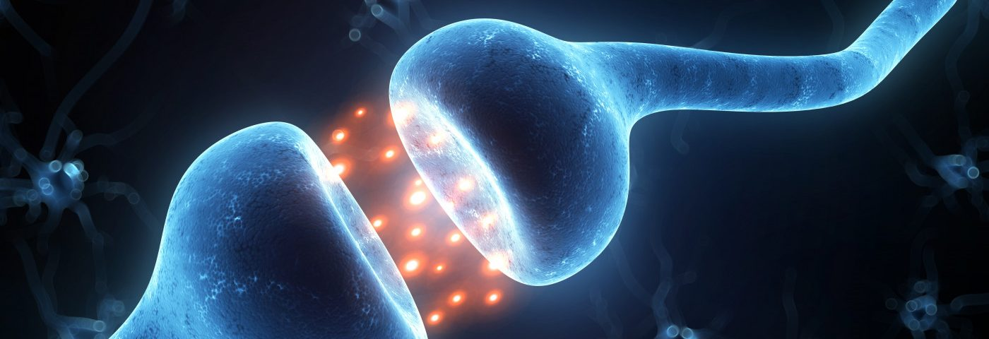 Mouse Study Links Cortical Inflammation to Immune Cell Destruction