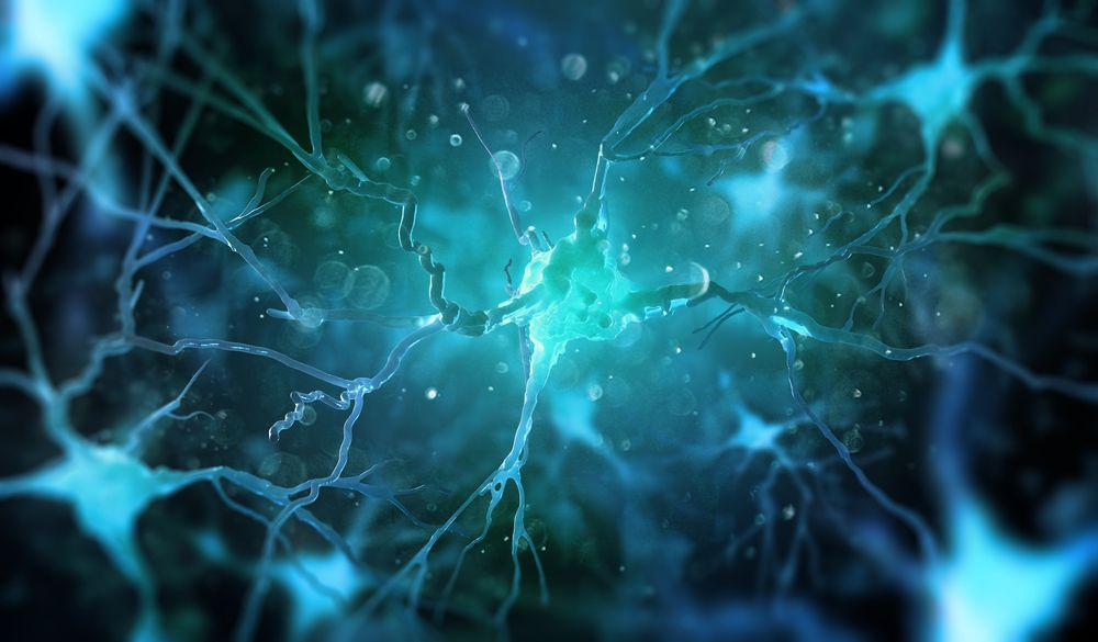 nerve cell and glia communication may have MS implications/multiplesclerosisnewstoday.com/neurons and glia